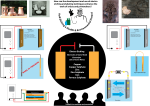 Presentation Poster